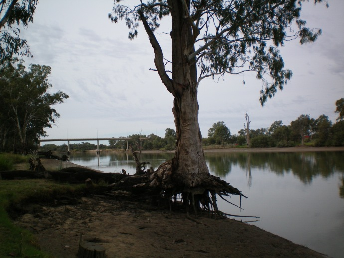 Water level in the Murray is very low.