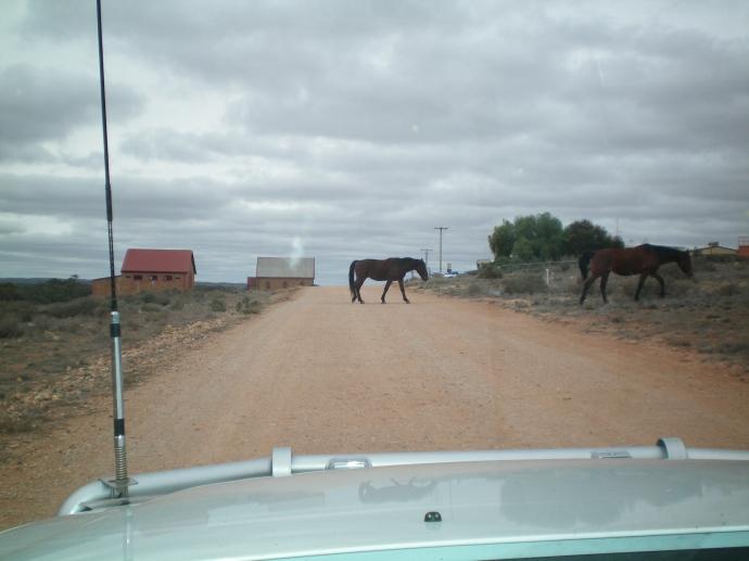 Horses roam free at Silverton