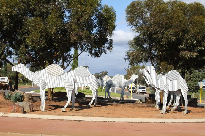 Corrugated Iron Camels in Norseman