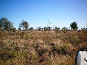 Flat Scrubby Landscape