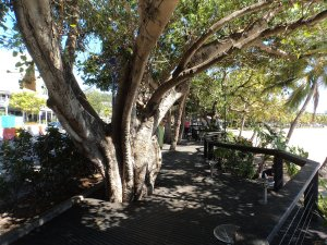 Nice boardwalk at Airlie Beach