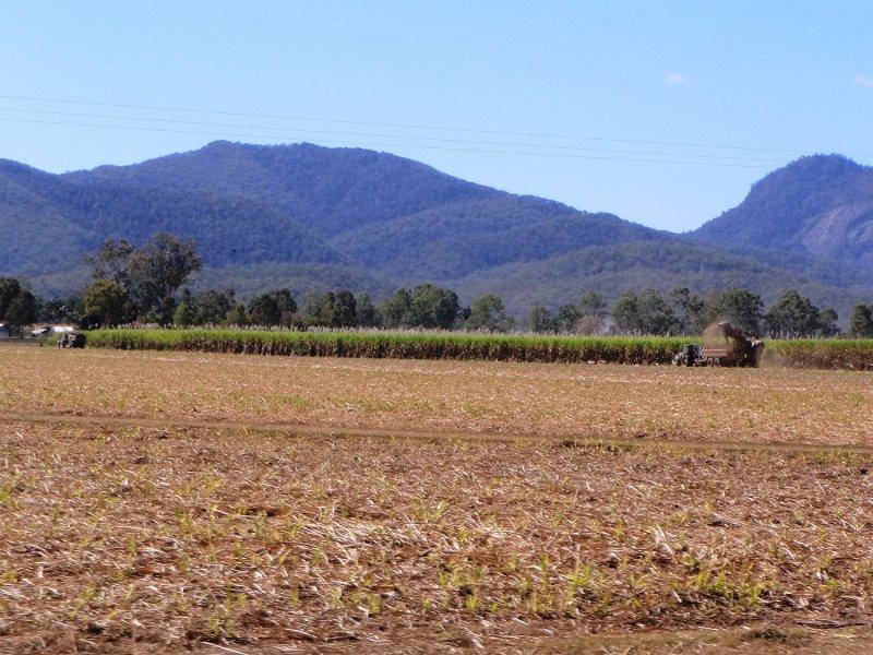 Cane Harvesting outside Mackay