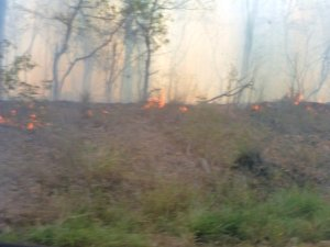 The fire burnt through over 100 hectares