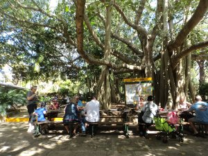 Lunch under trees at Botanic Gardens