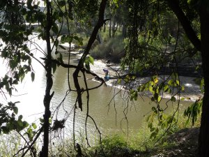 Fellow Travellers Fishing on the Fitzroy River bank