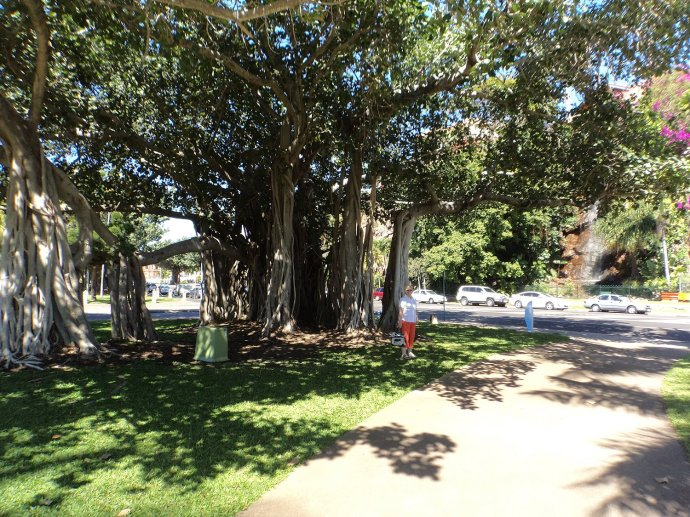 Magnificent Trees Along The Strand