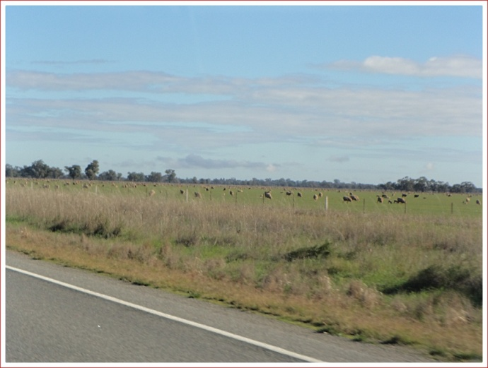 Typical landscape north of Narrandera