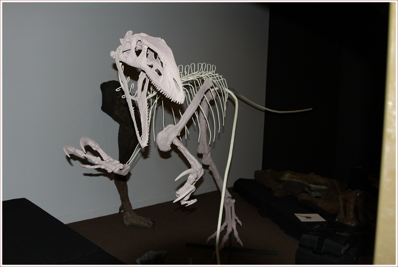 Bones etc on Display at the Dinosaur Centre near Winton