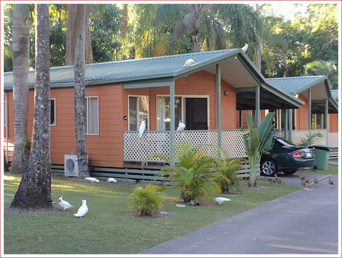 Some of the permanent residents we share the caravan park with.