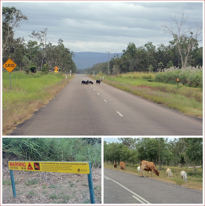 Pigs and cattle on the road and crocodile warning signs everywhere