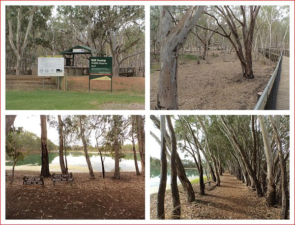Nhill Swamp Boardwalk