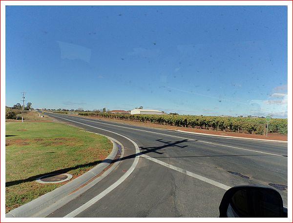 Plenty of grape vines along the way.