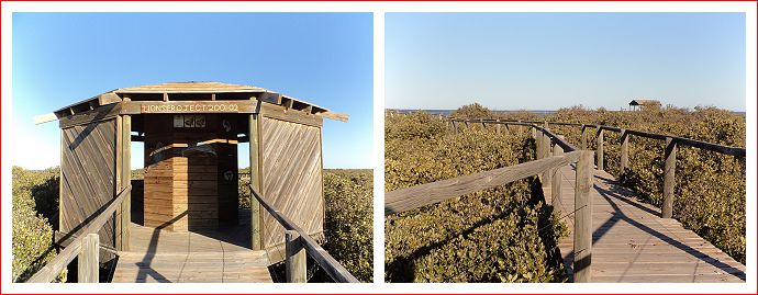 Mangrove Walk.