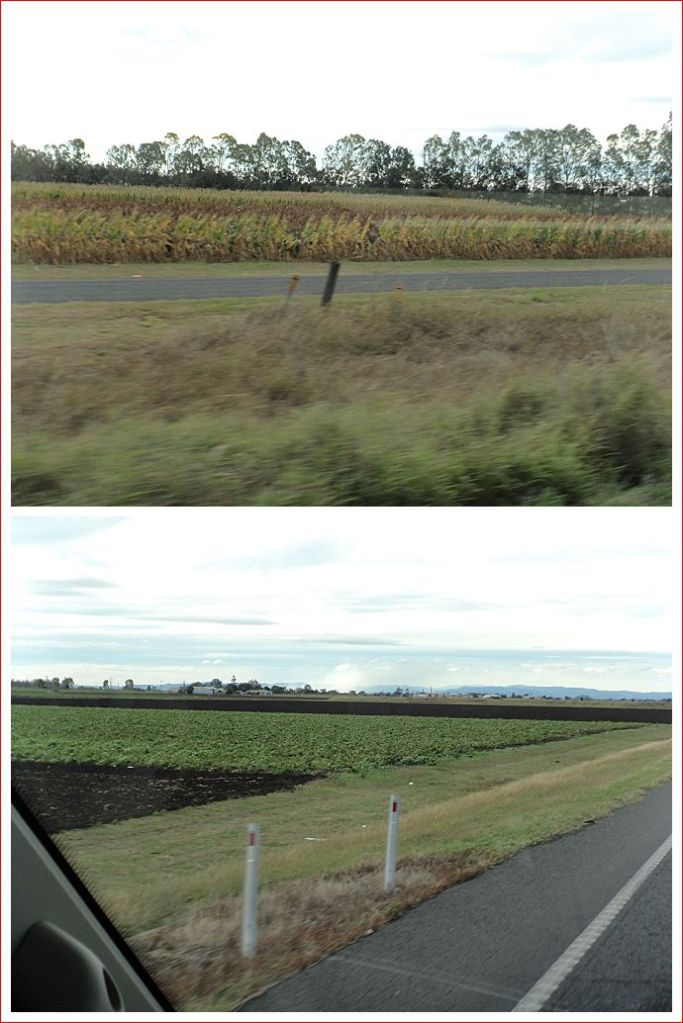 Sugar cane fields and irrigated vegetables