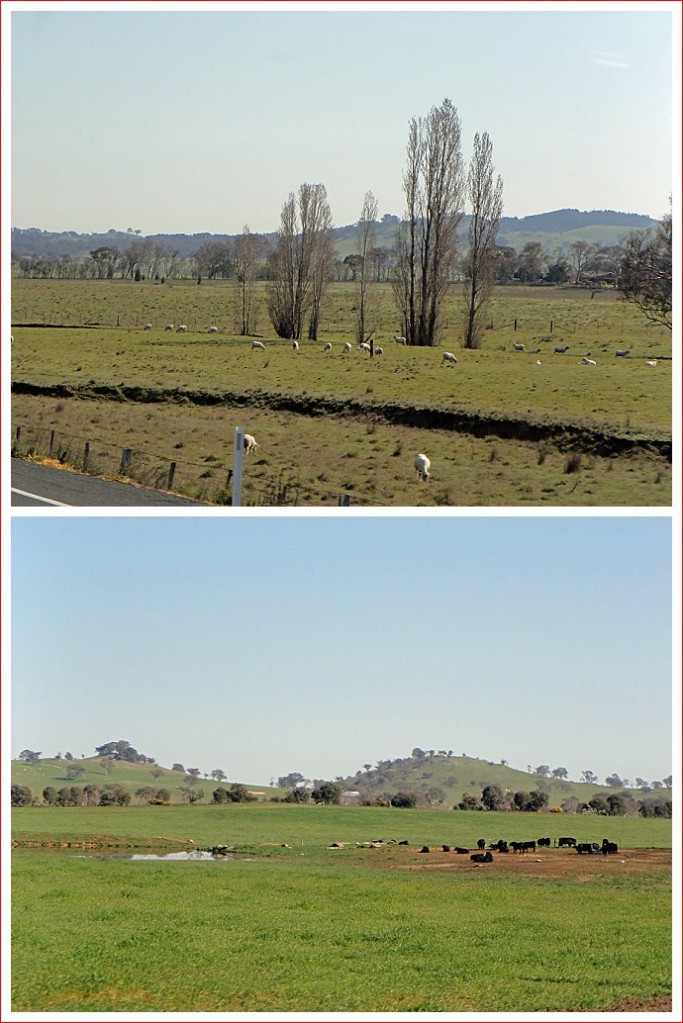 Scenes along the Barton Highway